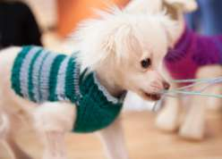 Wendy Bernard shows knitters a quick and easy way to whip up a personalized sweater for your dog using two knitted rectangles.