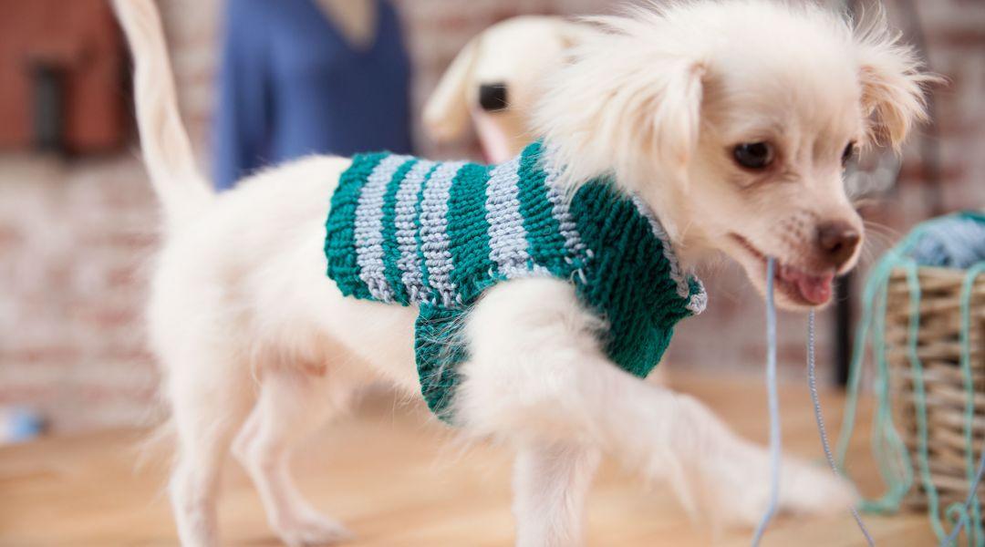 Knit a Custom-Fit Dog Sweater